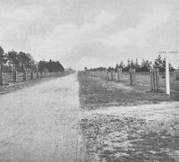Avenue of Honour 1917
